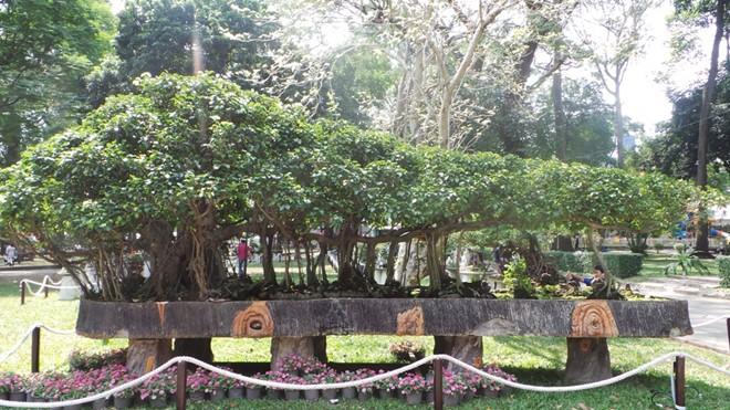 'Kì hoa dị thảo' tiền tỷ hội tụ tại Sài Gòn