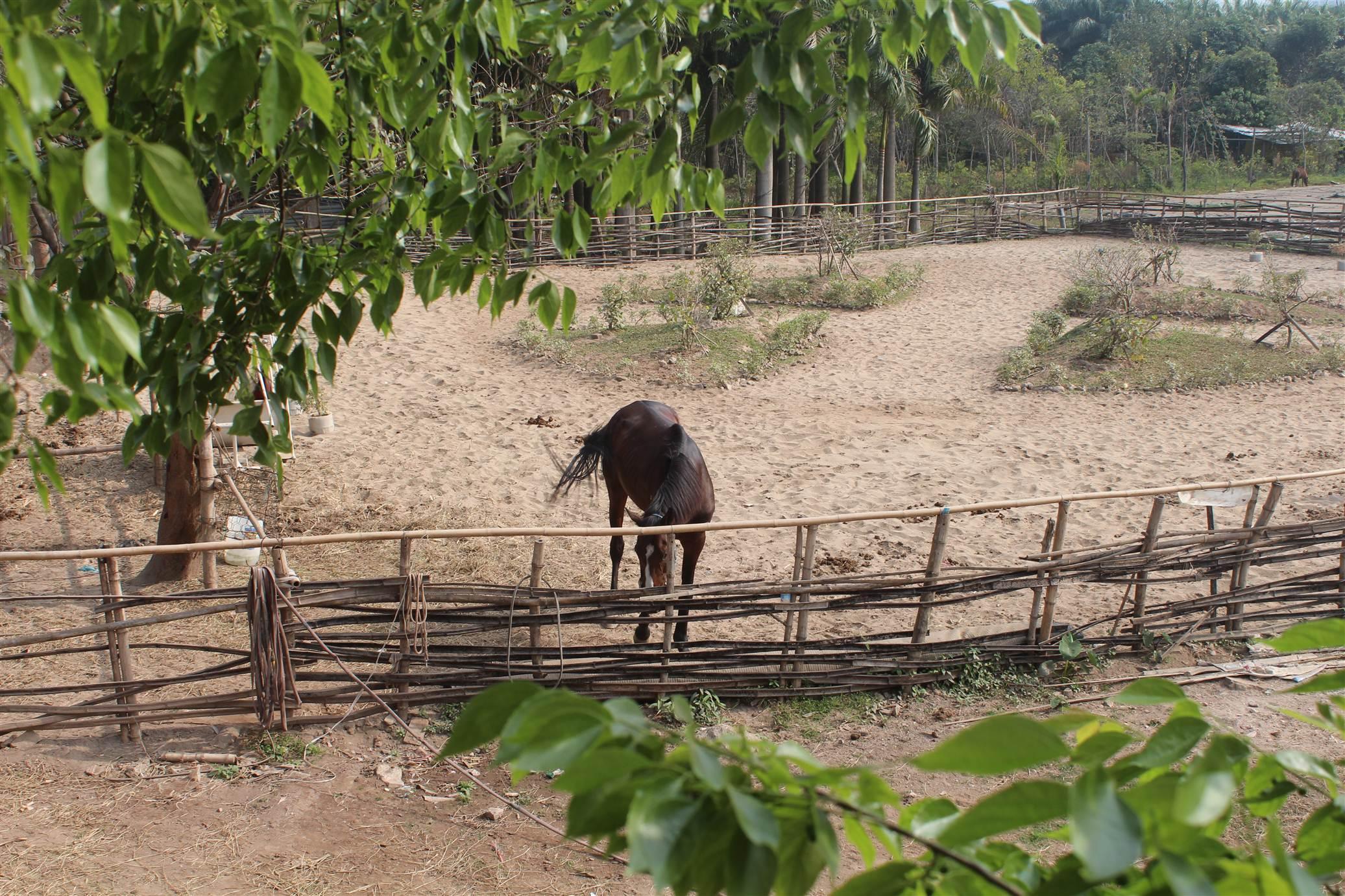 Hình ảnh Đột nhập trang trại ngựa đua tiền tỷ giữa Hà Nội số 2