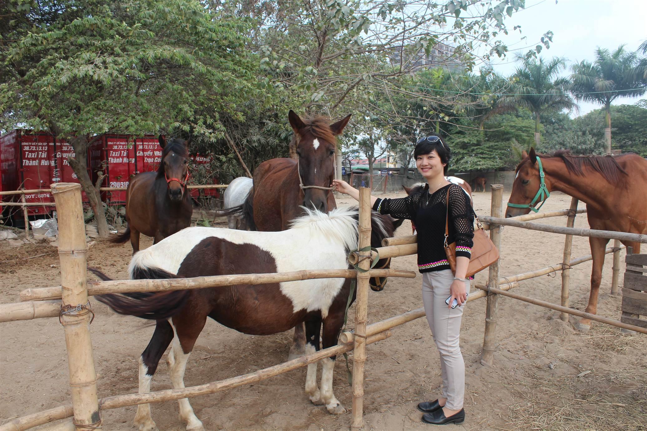 Hình ảnh Đột nhập trang trại ngựa đua tiền tỷ giữa Hà Nội số 4