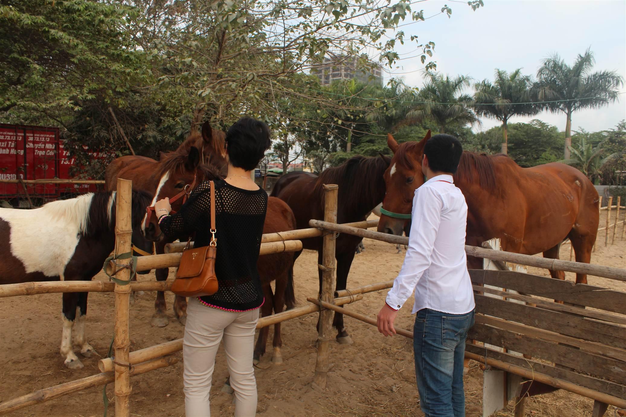 Hình ảnh Đột nhập trang trại ngựa đua tiền tỷ giữa Hà Nội số 6