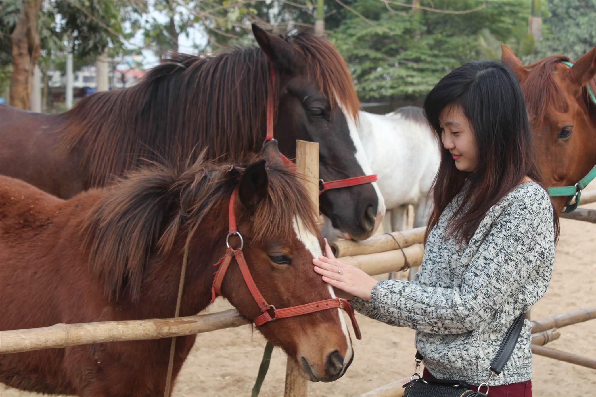 Hình ảnh Đột nhập trang trại ngựa đua tiền tỷ giữa Hà Nội số 7