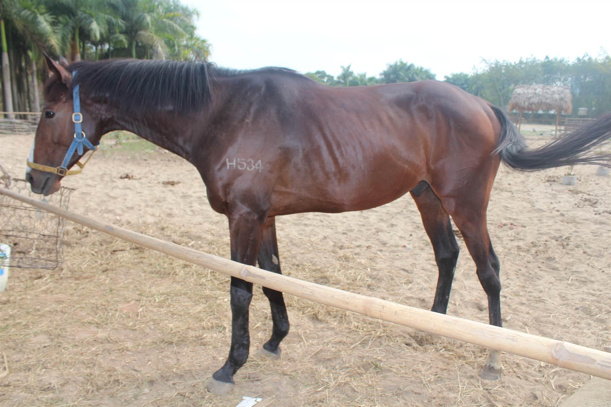 Hình ảnh Đột nhập trang trại ngựa đua tiền tỷ giữa Hà Nội số 12