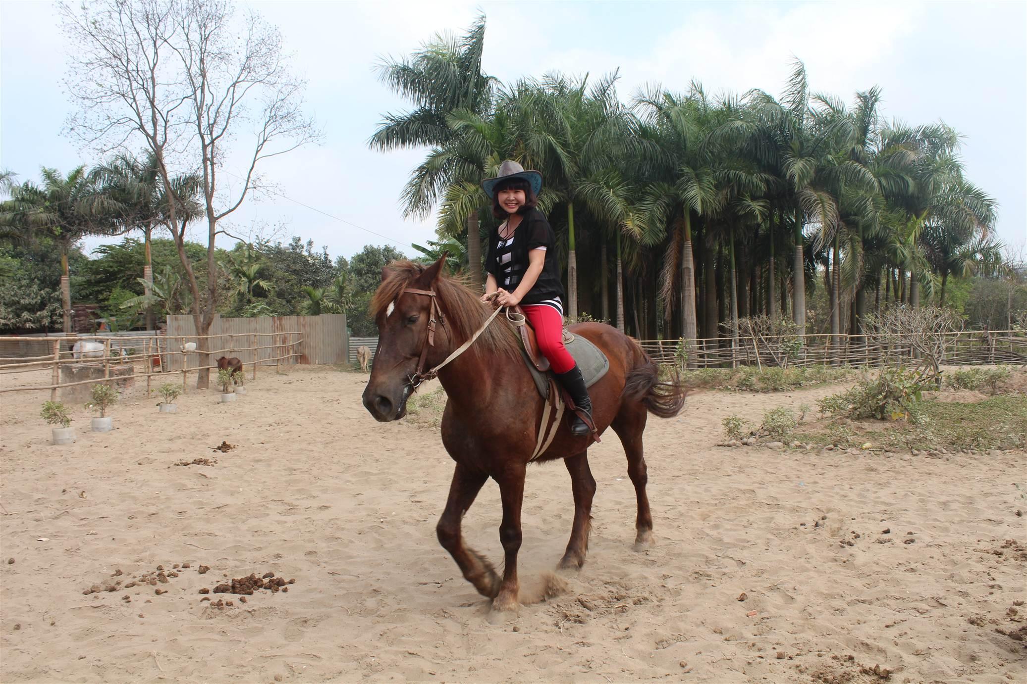 Hình ảnh Đột nhập trang trại ngựa đua tiền tỷ giữa Hà Nội số 15