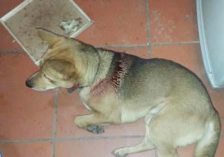Hà Nội: Nửa đêm vác hung khí chém chó, đe dọa giết người 5