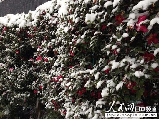 Nhật Bản: Tuyết rơi khủng khiếp nhất 20 năm qua 8