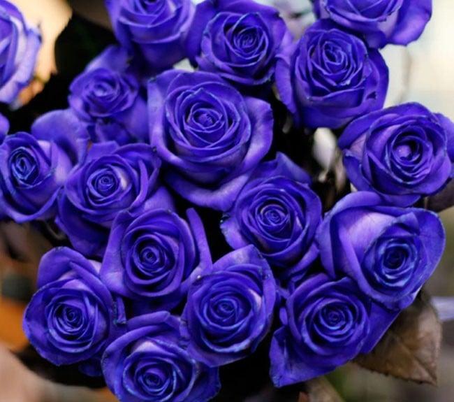 Hơn 5 triệu đồng một bó hồng xanh Valentine 4
