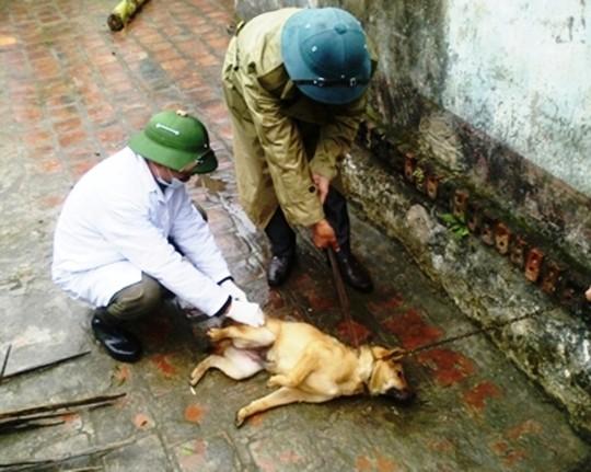 Chó dại cắn 2 người chết, 8 người bị thương 4