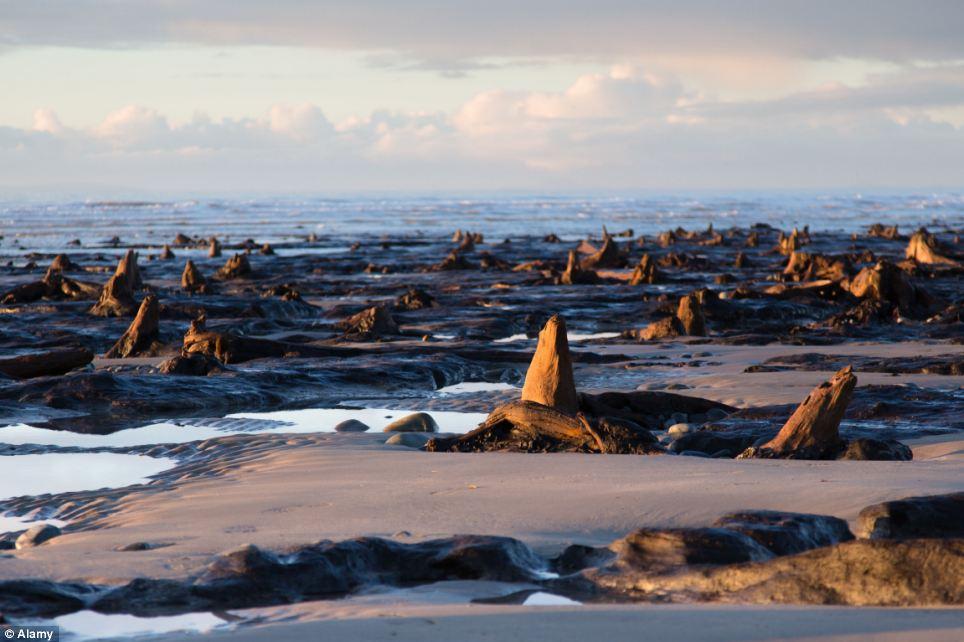 Rừng 5.000 tuổi nguyên vẹn trên đại dương 14
