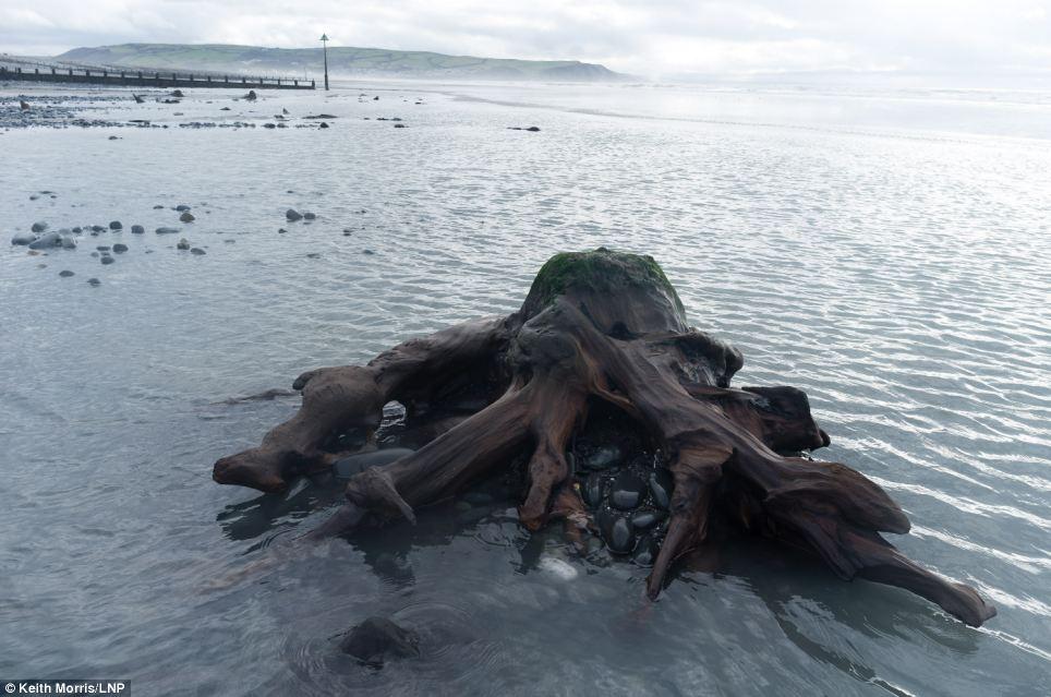 Rừng 5.000 tuổi nguyên vẹn trên đại dương 11