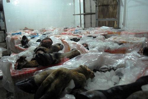 Bắt giữ 1,6 tấn chân trâu bò thối trên đường tuồn vào quán nhậu TP.HCM 5