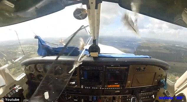 Chim đâm thủng cửa kính máy bay, lao thẳng vào mặt phi công 6