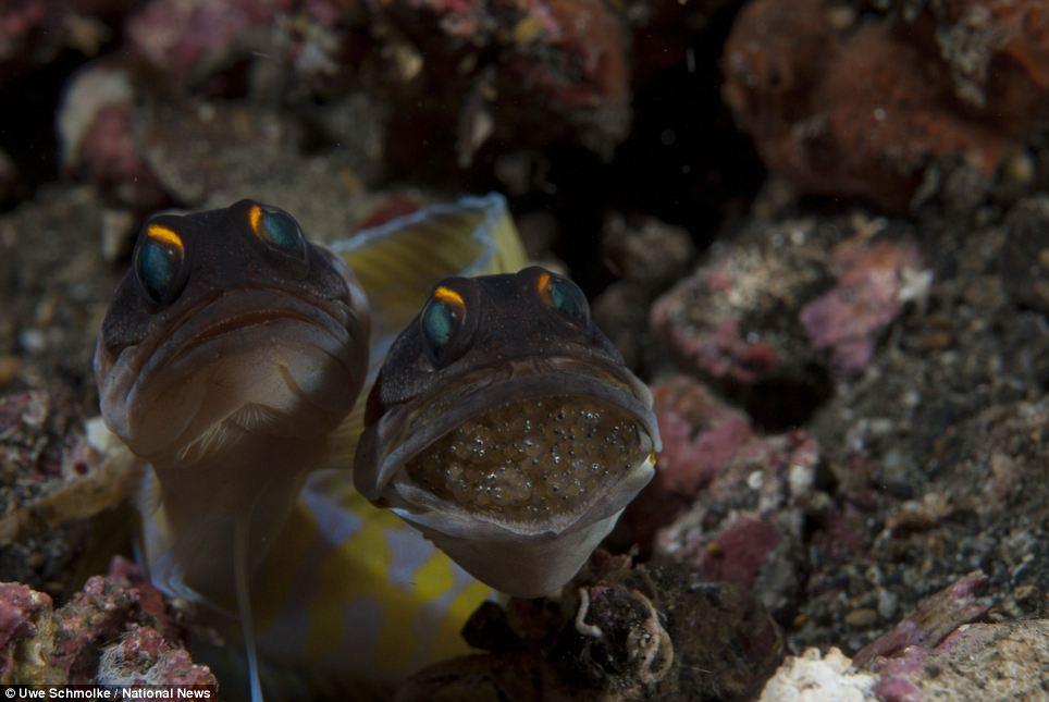 Chiêm ngưỡng những bức ảnh tuyệt đẹp dưới đại dương 7