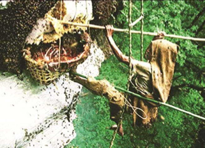 Khả năng bắt ong của thợ săn ở bìa rừng xứ Mường  6