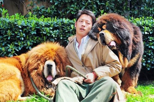 Đại gia chi 40 tỷ mua một chú chó Ngao Tây Tạng 4