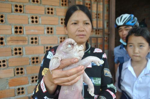 Bà Rịa-Vũng Tàu: Xôn xao chuyện lợn đẻ ra...voi