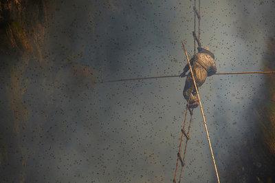 Clip thợ săn ong treo mình lủng lẳng giữa vách núi Himalaya hùng vĩ 1