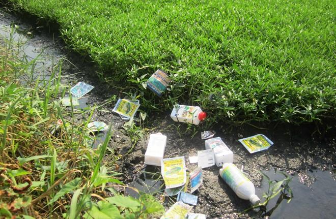 'Tắm' hóa chất, thuốc kích thích cho rau muống ở Sài Gòn 6