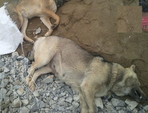 200 người dân truy sát, đánh gần chết kẻ bắt trộm chó 5