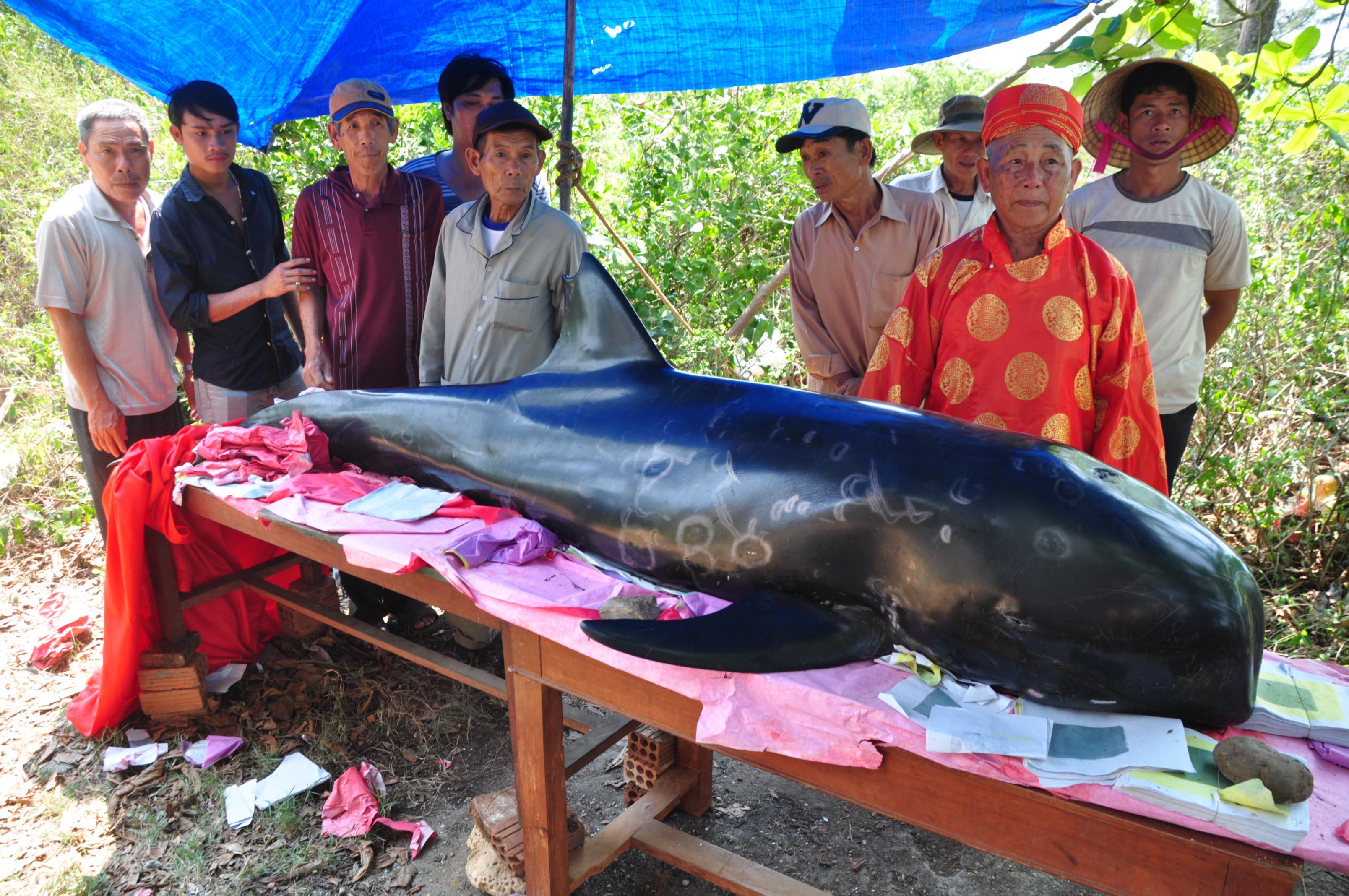 Cá Ông có hoa văn lạ, nặng 300kg dạt vào bờ 4