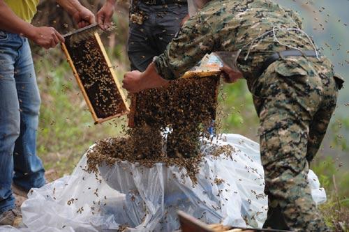 Dị nhân Trung Quốc để 45kg ong bâu kín người 6