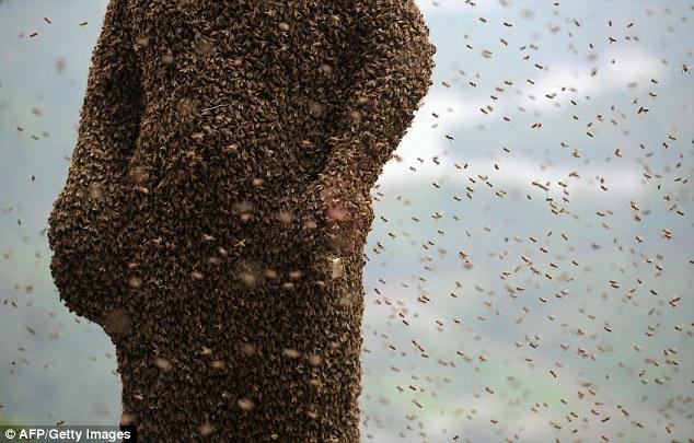 Dị nhân Trung Quốc để 45kg ong bâu kín người 9