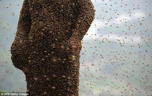 Rùng mình 46 vạn con ong bu kín người đàn ông khỏa thân 1