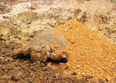 Bí ẩn vùng đất thiêng Trà Bát: Cụ rùa đá tái xuất sau gần 500 năm 6