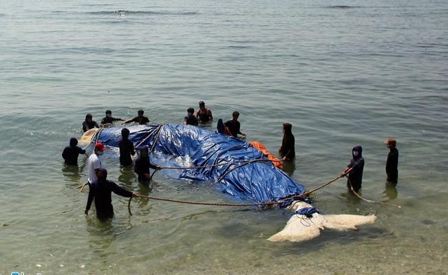 Lai dắt cá voi 5 tấn từ Trường Sa về chôn tại đảo Lý Sơn 3