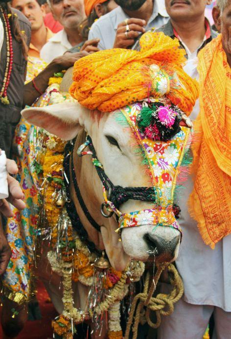 Choáng đám cưới bò 325 triệu đồng