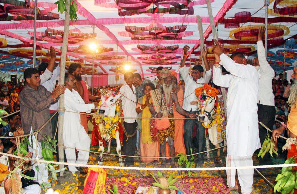 5000 người tham dự lễ cưới của 2 chú bò ở Ấn Độ 12