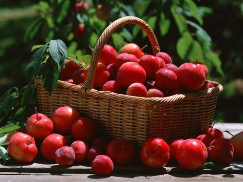 9 loại trái cây giúp đánh tan mỡ bụng hiệu quả 5