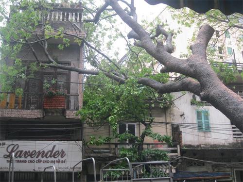Mưa lớn, cây bật gốc đổ đè nhà dân - caydodenhadan tinmoi1 - Mưa lớn, cây bật gốc đổ đè nhà dân