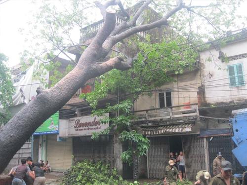 Mưa lớn, cây bật gốc đổ đè nhà dân