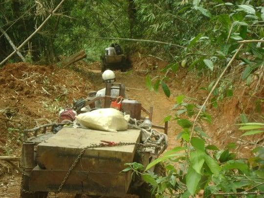 Kỷ luật 5 cán bộ kiểm lâm để lâm tặc phá rừng 5