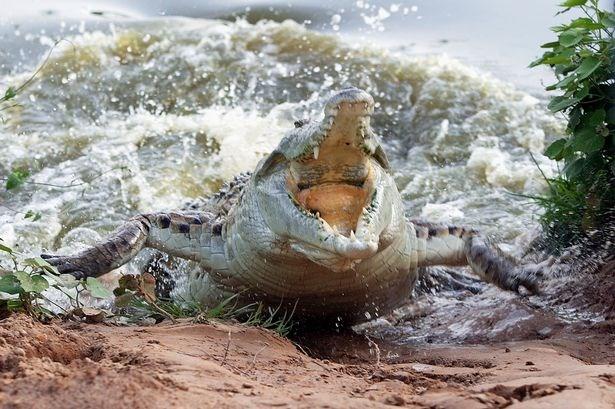 Bé trai 11 tuổi bị cá sấu nuốt chửng khi đi câu cùng bố mẹ 4