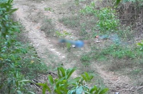 Đi chăn bò, phát hiện xác chết bí ẩn trong rừng bạch đàn 5