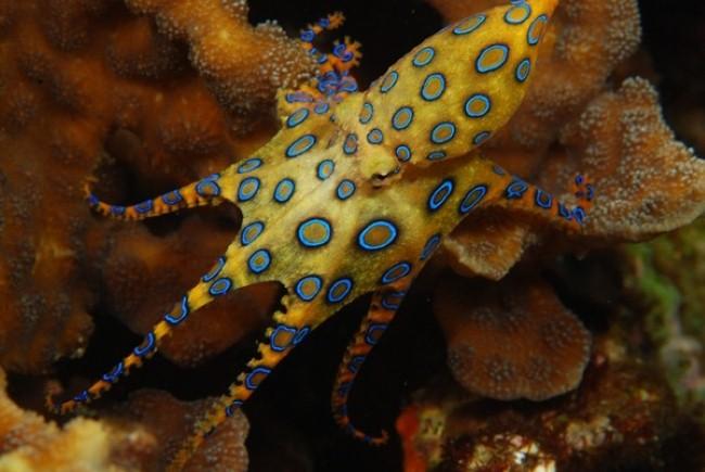 Cận cảnh loài bạch tuộc