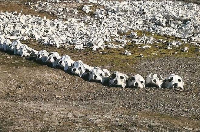 Rùng mình bãi biển nghĩa địa cá voi dải đầy xương trắng 8
