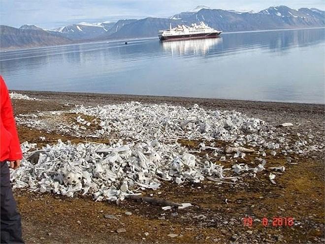 Rùng mình bãi biển nghĩa địa cá voi dải đầy xương trắng 10