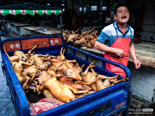 Rùng mình những hình ảnh khủng khiếp trong lễ hội ăn thịt chó  14