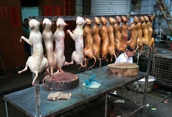 Rùng mình những hình ảnh khủng khiếp trong lễ hội ăn thịt chó  13