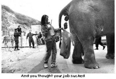 viec6 Điểm qua những công việc được xem là tệ hại nhất thế giới.