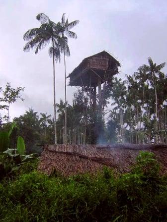 Cận cảnh cuộc sống của bộ tộc ở trần, ăn thịt người, sống trên ngọn cây 4