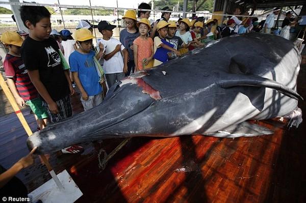 Kinh hãi với cảnh tượng xẻ thịt đẫm máu cá voi ở Nhật Bản 6