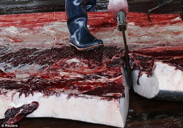 Kinh hãi với cảnh tượng xẻ thịt đẫm máu cá voi ở Nhật Bản 7