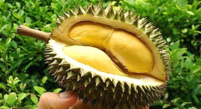 Những tác hại khôn lường khi ăn sầu riêng sai cách 1