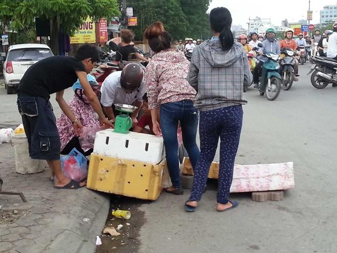 Cua biển 50.000 đồng/con ở Hà Nội có nguồn gốc từ đâu? 5