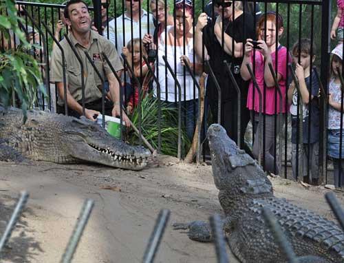 Kinh hãi chứng kiến cá sấu ngoạm tay người lôi xuống hồ 6