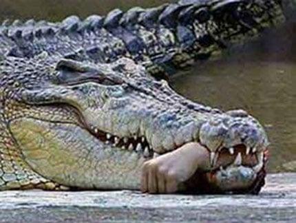 Kinh hãi chứng kiến cá sấu ngoạm tay người lôi xuống hồ 10