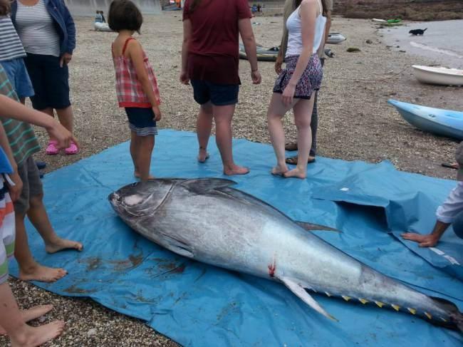 5 cô gái bắt được con cá ngừ khổng lồ trị giá hơn 35 tỷ đồng 6